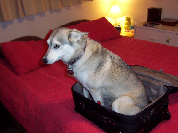 Tips For Travelling With Pets in India