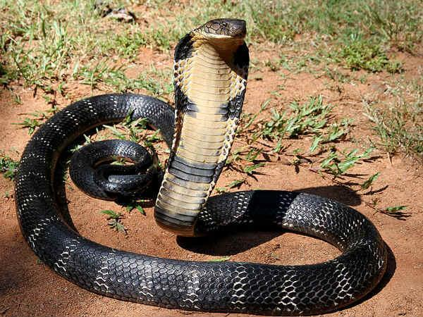 5 Best Snake Parks in India!