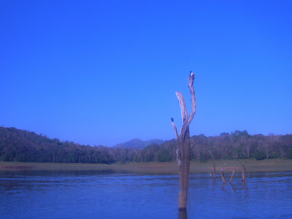 Best Places to See In and Around Thekkady in Kerala!