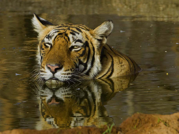 Also read: 5 Top Wildlife Destinations in Rajasthan
