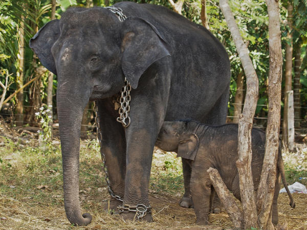 Elephant Camps in South India
