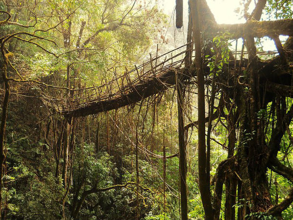 Seven Wonder Places of India - Living Root Bridges In Meghalaya