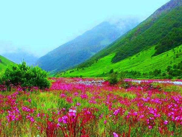 Seven Wonder Places Of India- The Flower Valley In Uttarakhand