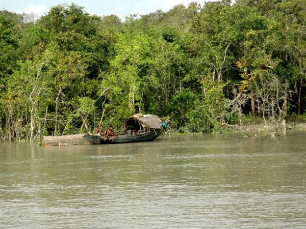 Read More: Sunderbans Mangroves In West Bengal