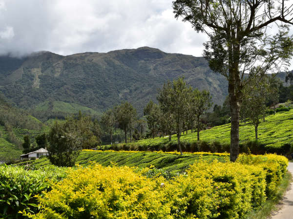3 Best Road Trips in Kerala Where Nature Devours You!