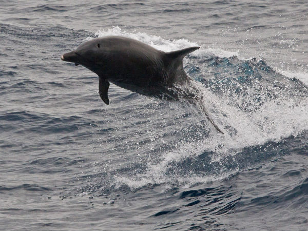 6 Best  Dolphin Destinations in India