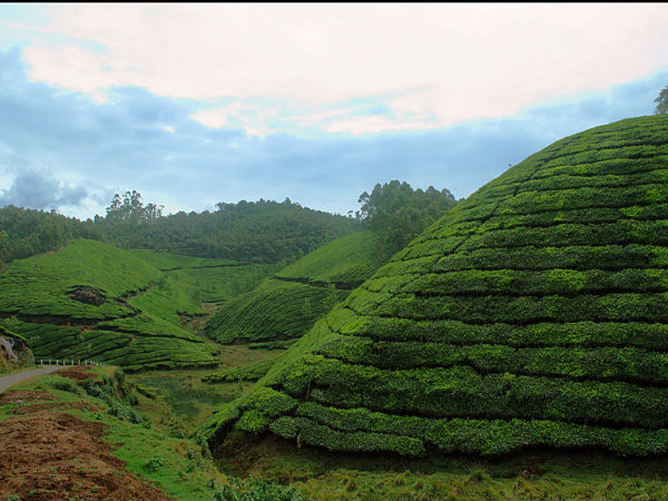 Top Things To Do in Munnar!