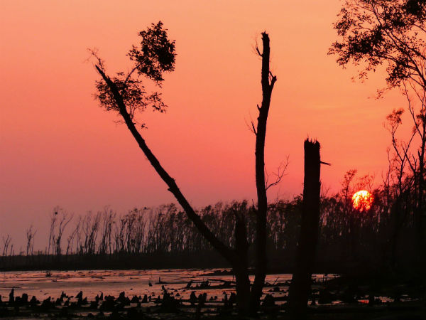Sundarbans! Seven Wonder Places Of India