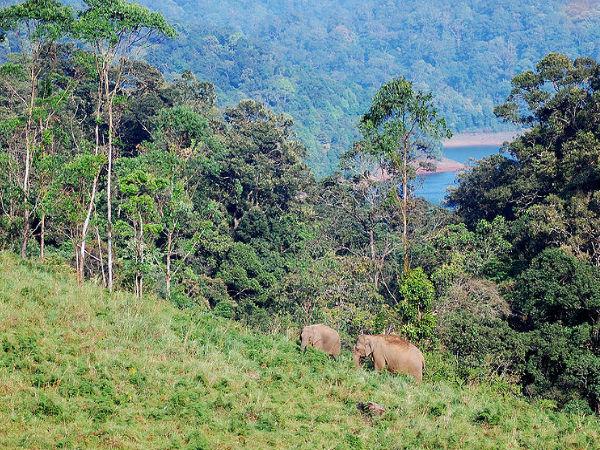 A Triangle Tour Through The Dazzling Heart Of Kerala - Munnar, Gavi & Kumarakom