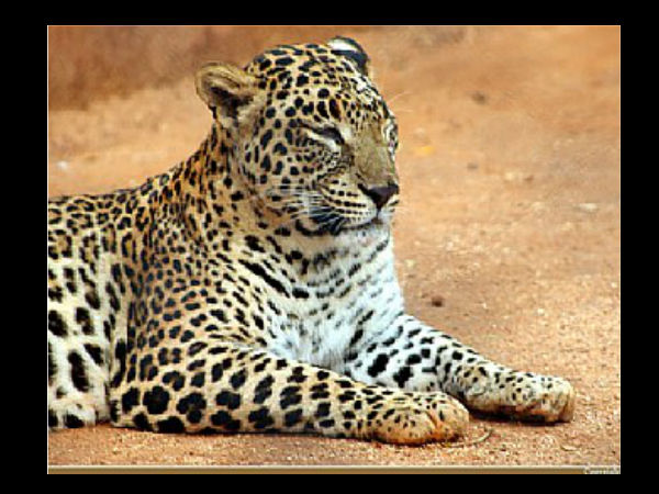 Facts About Mysore Zoo
