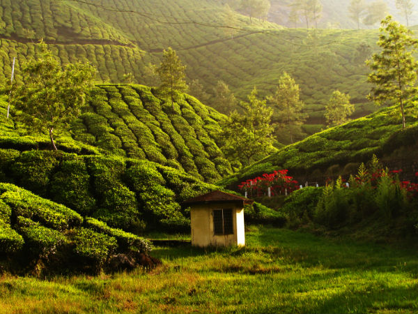 Most Incredible Bucket List Experiences In India - Munnar