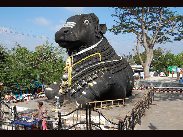 Have You Visited this Nandi in Chamundi Hills?