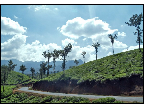 22 Amazing Road trips from Bangalore - Wayanad via Bandipur