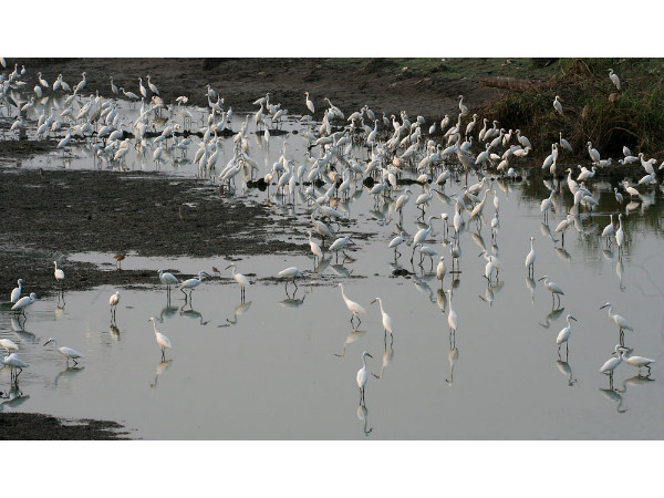 Kolleru Bird Sanctuary in Andhra Pradesh