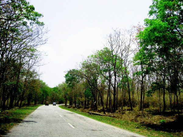 Best Time to Visit Bandipur