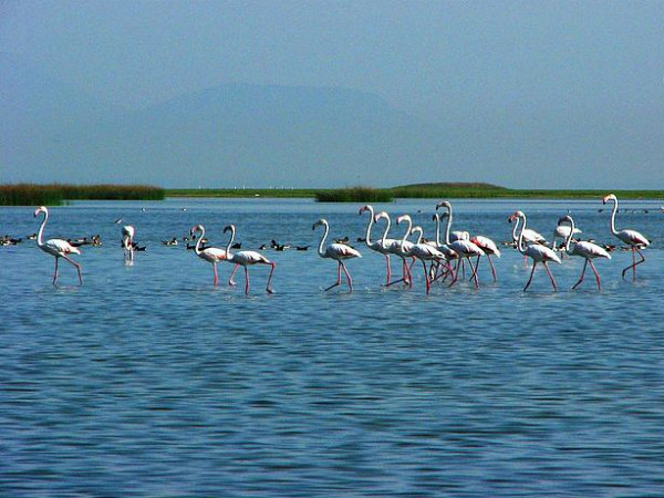 7 Beautiful Estuaries in India