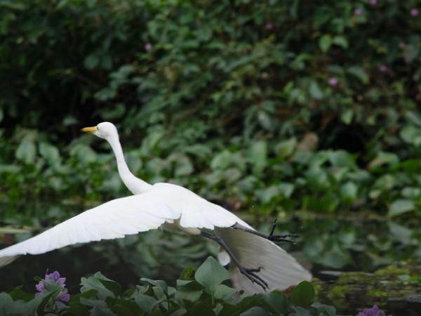 Enjoying the Homecoming of Birds: Kumarakom Bird Sanctuary in Kerala