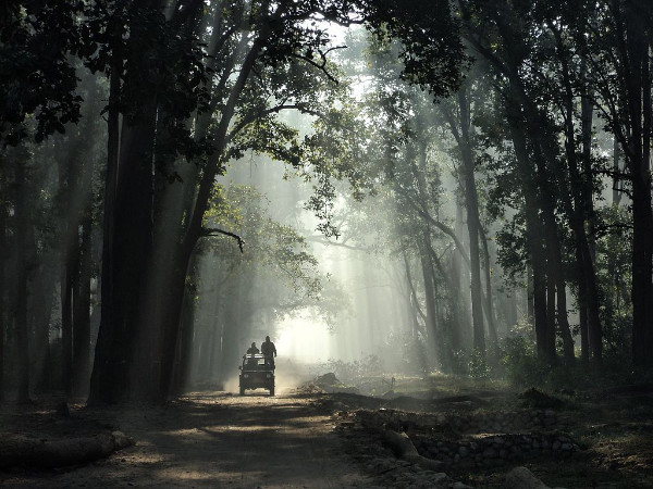 8 Best Places for Jungle Safaris in India