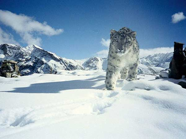 13. Hemis National Park, Jammu And Kashmir – The Snow Leopard's Abode