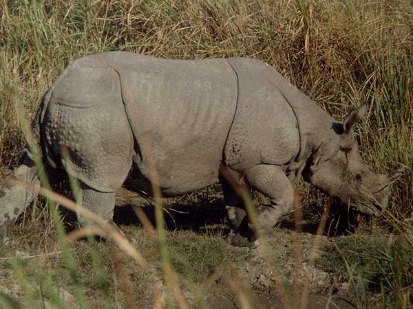 12. Kaziranga, Assam – Less People, More Rhinos, I Say