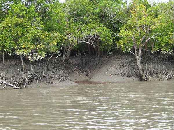 3. Sundarbans, West Bengal – Home Of The Largest Mangrove Forests
