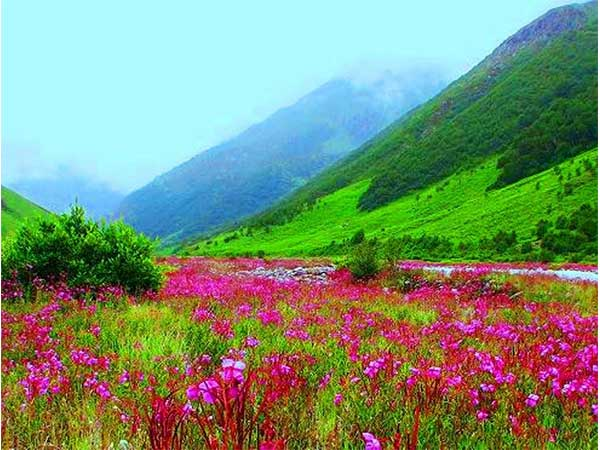 11. Valley of Flowers, Uttarakhand – Strictly For Trekkers