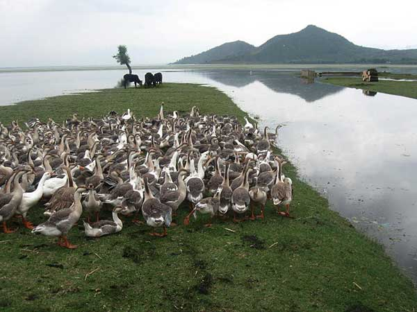 15. Wular Lake, Jammu and Kashmir – The Shrinking Lake