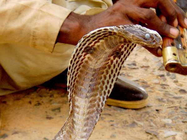 The Land of Snakes, Maharashtra