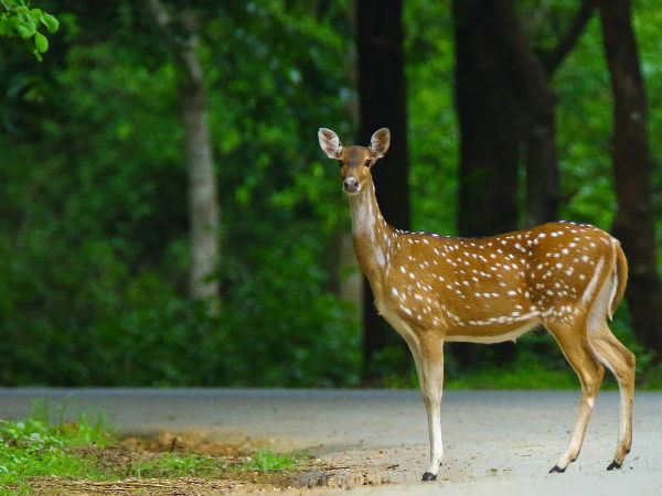 Here're All The Details About Dandeli Wildlife Sanctuary