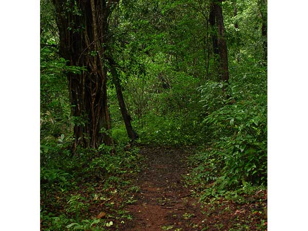 cotigao wildlife sanctuary goa