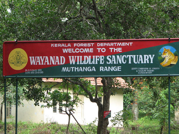 A Guide To Wayanad Wildlife Sanctuary