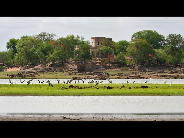 9. Pocharam Wildlife Sanctuary and Dam