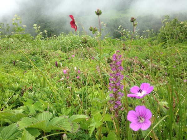 Valley of flowers uttarakhand trek