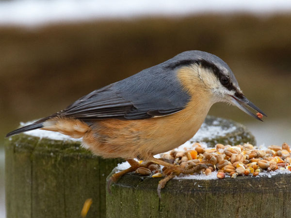 3. Arunachal Pradesh For Yunnan Nuthatch