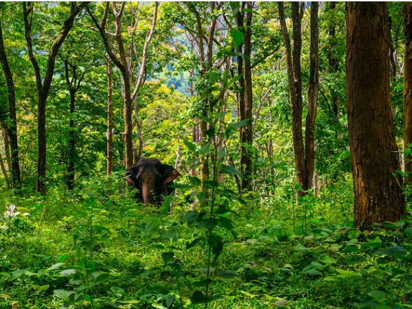 7. Western Ghats – Our Very Own Amazon Forest
