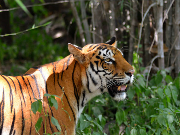 2. Koyna Wildlife Sanctuary