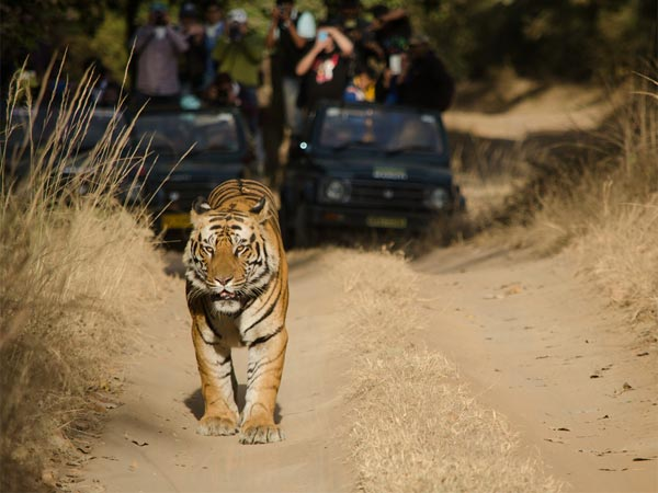 Into The Wild At Rajaji National Park