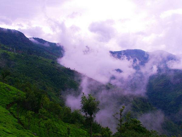 The Tea Gardens Of Coonoor In The Nilgiris