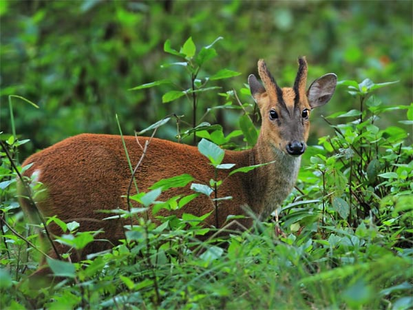 A Road Trip From Siliguri To Senchal Wildlife Sanctuary