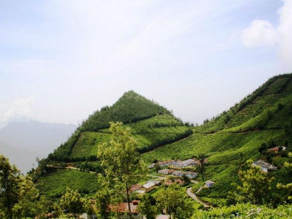 The World's Highest Tea Plantation