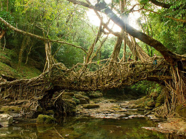 Day 6: Mawlynnong Village, Living Root Bridge