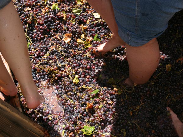 Grape-Stomping At Ramanagar