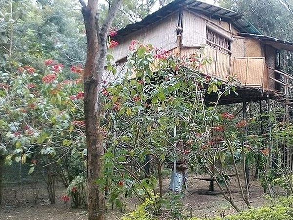 Tree House Stay At Mudumalai