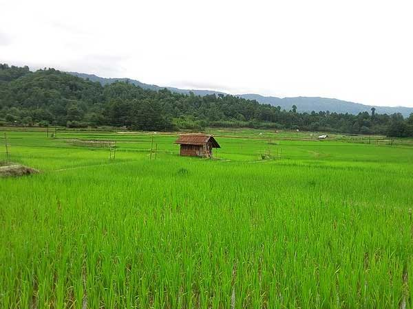Best Time To Visit Ziro