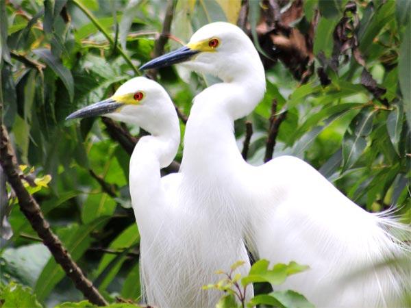 Wildlife Excursion To Bandipur From Bangalore!