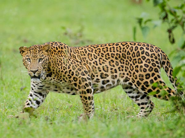 <strong>Read more about Nagarhole</strong>