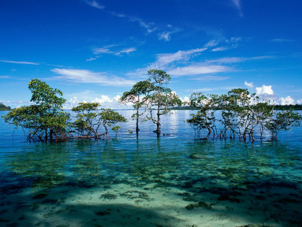 10. Havelock Island – Pentos