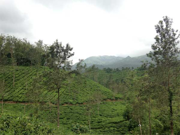 Places To Visit And Things To Do In Wayanad