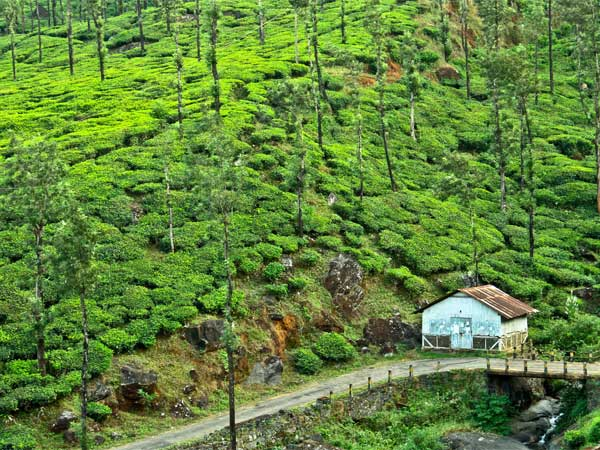 Where To Stay In Wayanad
