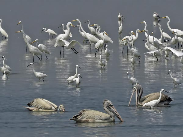 Pulicat Lake Bird Sanctuary, Andhra Pradesh